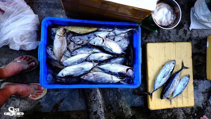 Cá Cù Lao Chàm