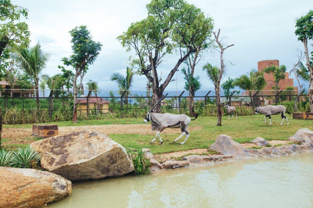 Công viên động vật