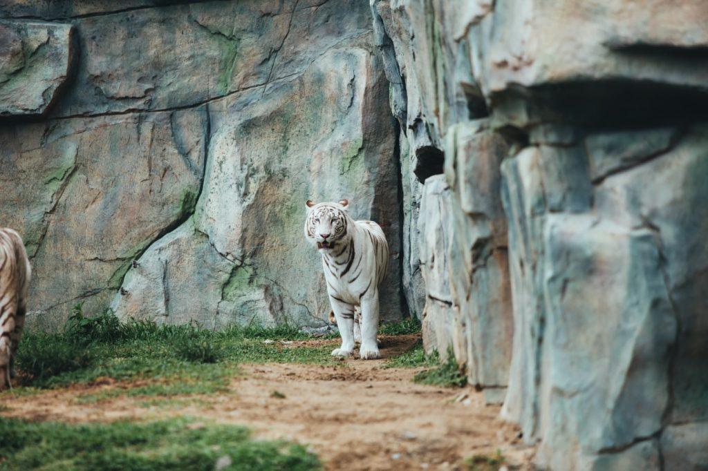 công viên động vật vinpearl